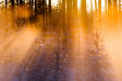 Backlit foggy forest views in the boreal forest near Kuhmo, Finalnd, at sunset in February